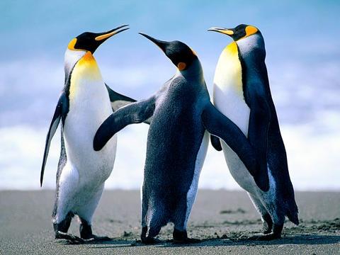Si parla di Google Penguin: negative SEO, penalizzazioni e altro..
